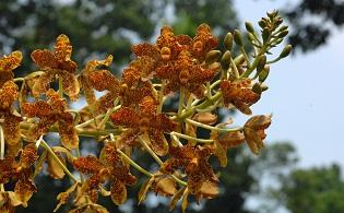Singapore Botanic Gardens' World of Flowers