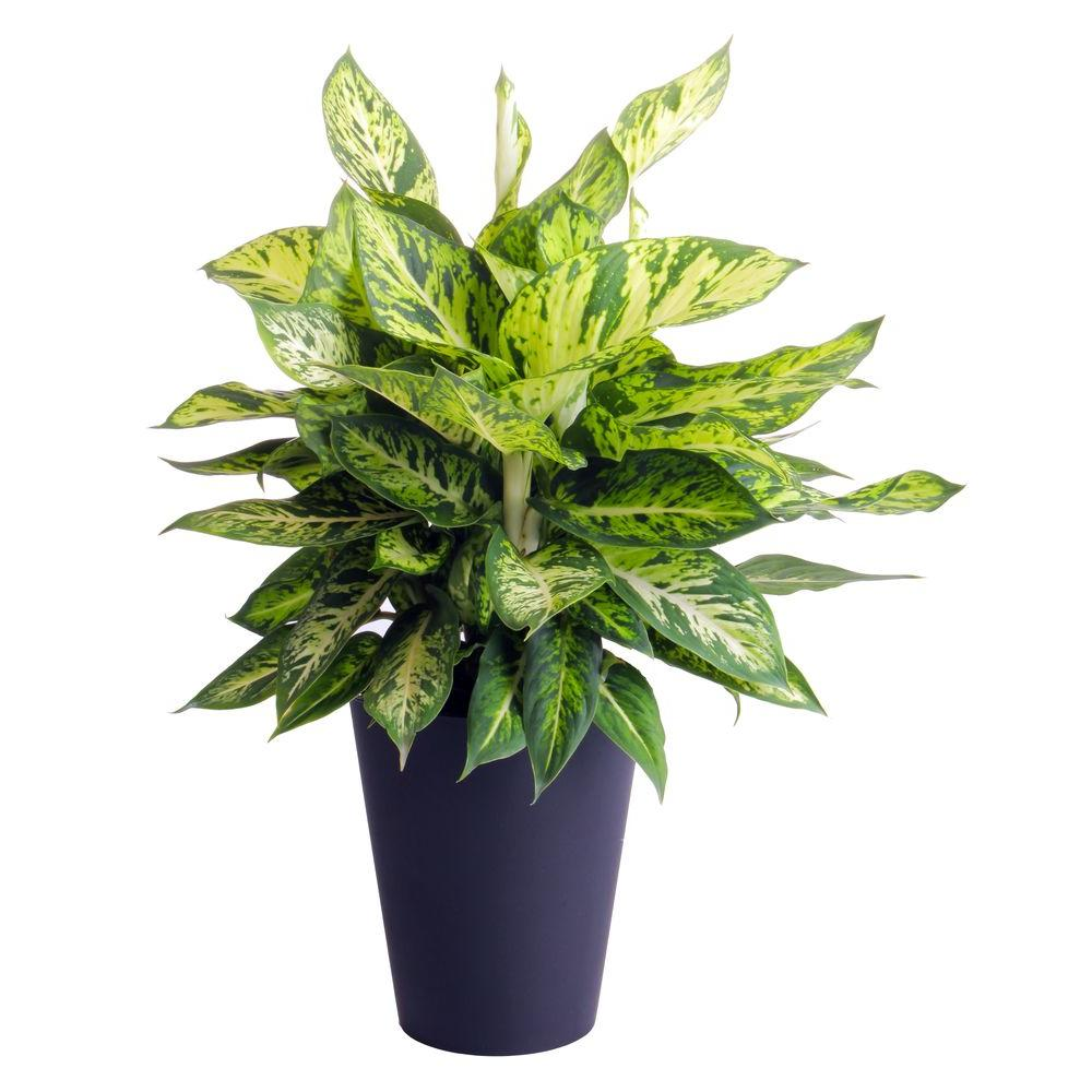 Silent Cleaners 8 House Plants That Purify While They