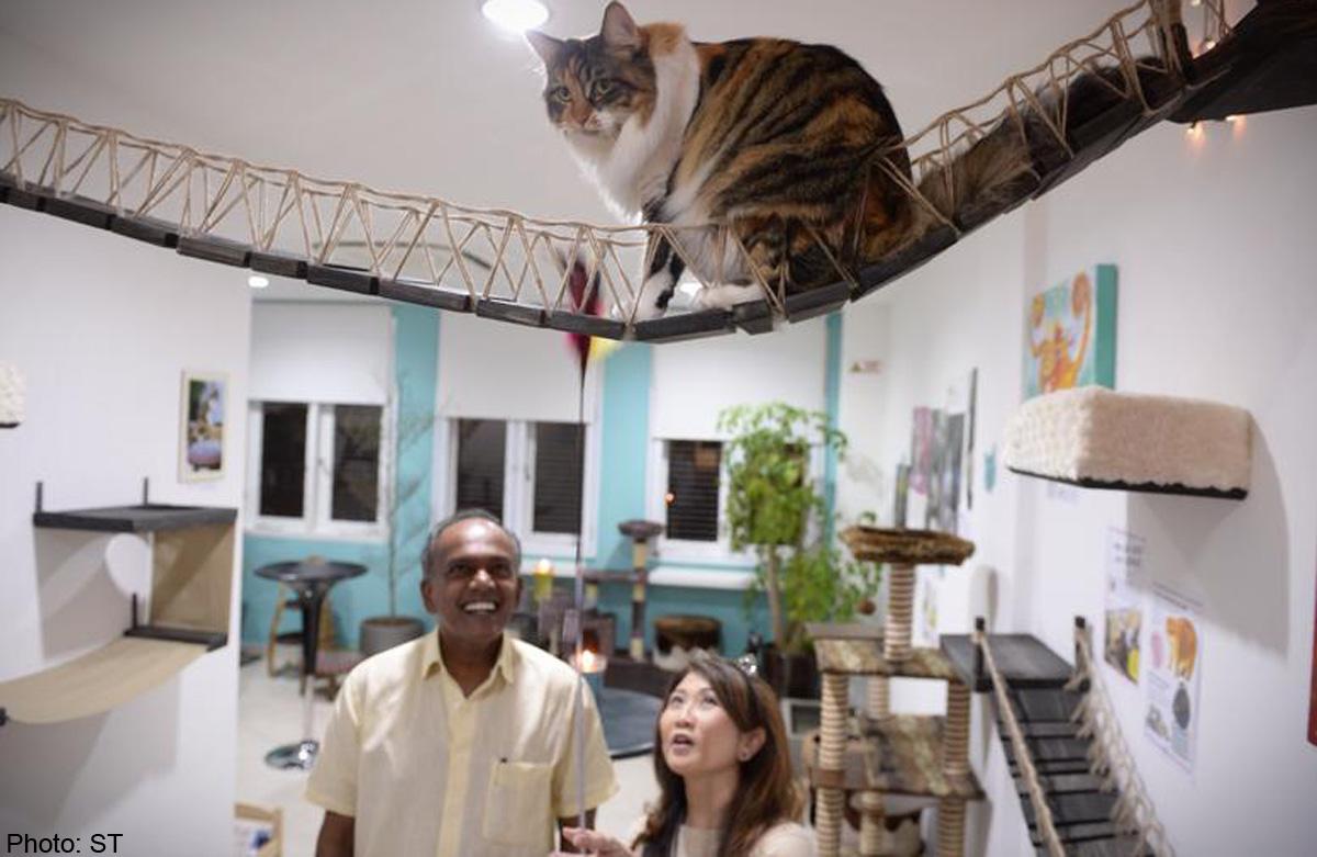 hdb flats cats home