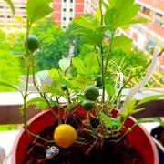 urban farming vegetables home