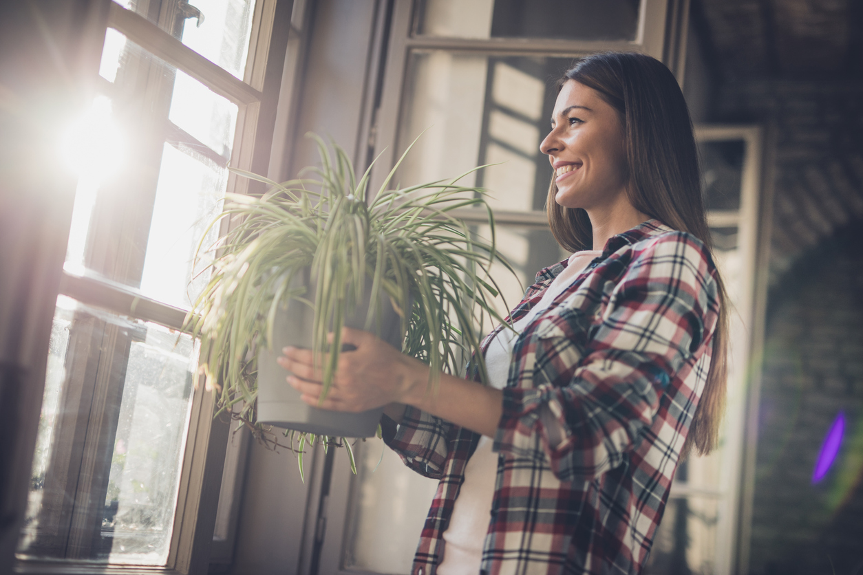 care indoor plants