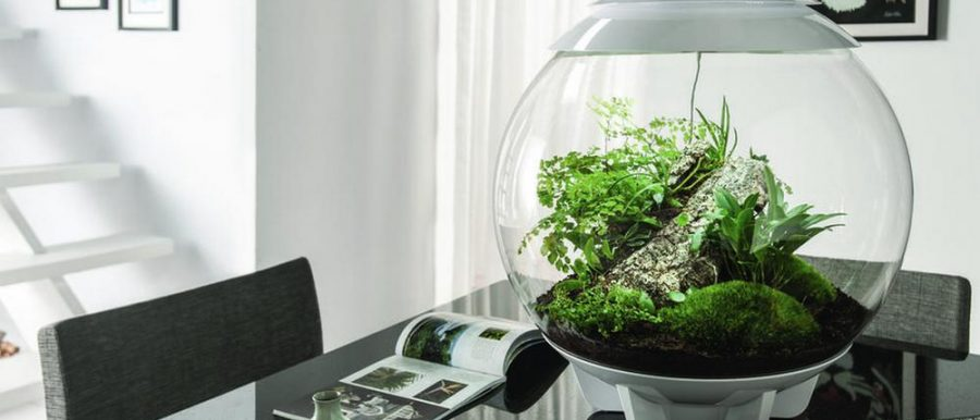 5 Easy To Care For Indoor Plants To Freshen Your Home Tried