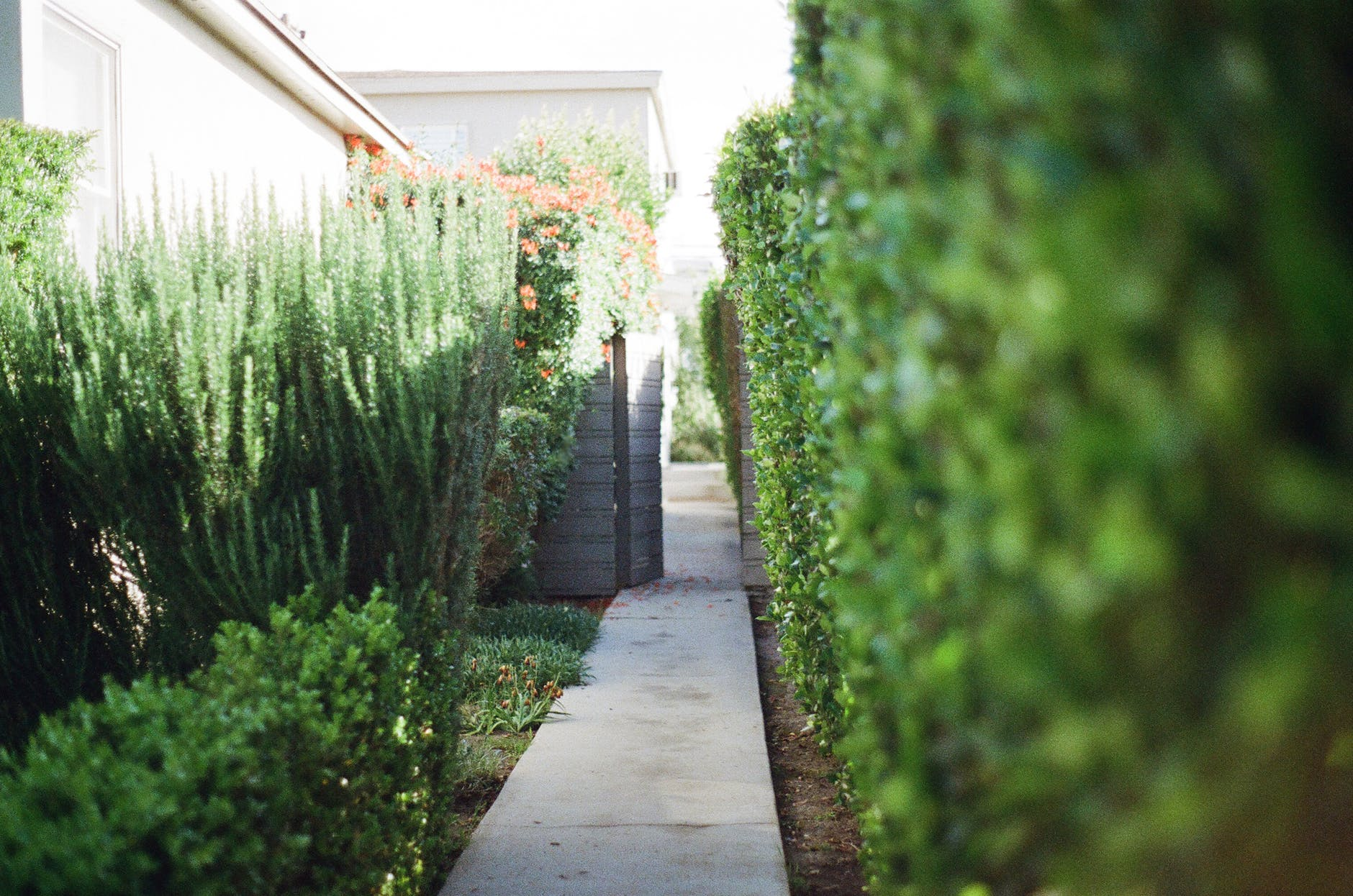 gardens are hotspots