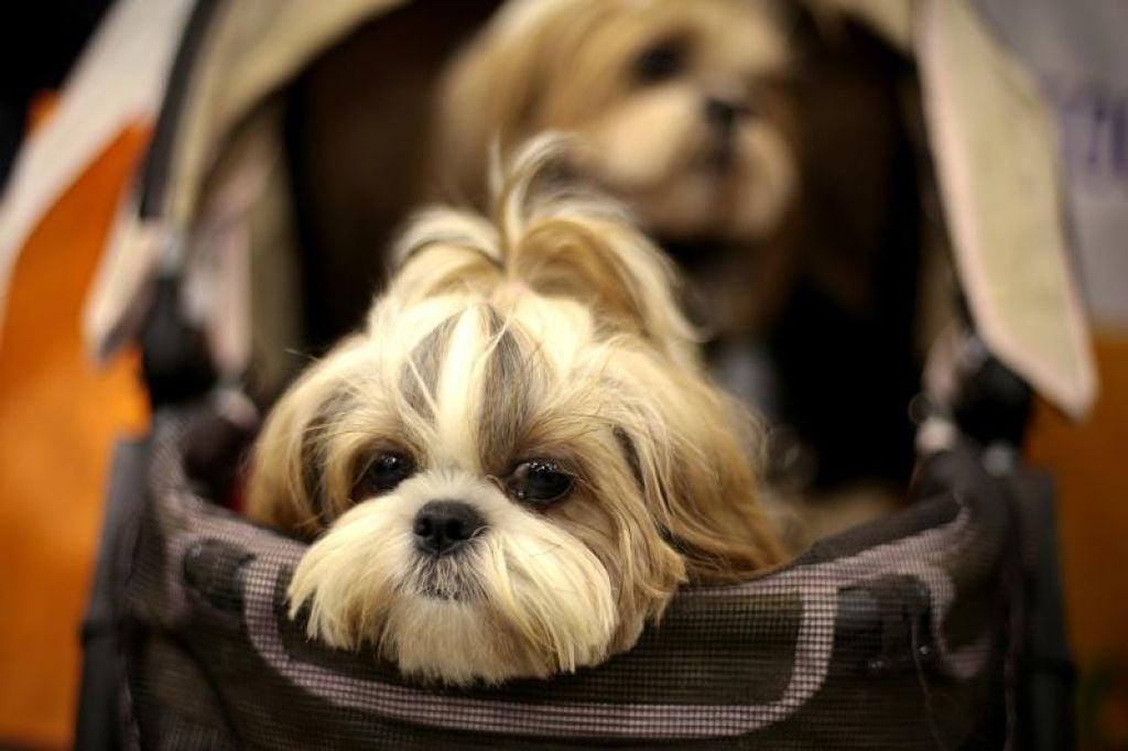HDB rules dogs