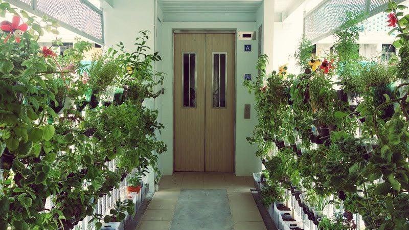 HDB flats koi pond herb garden