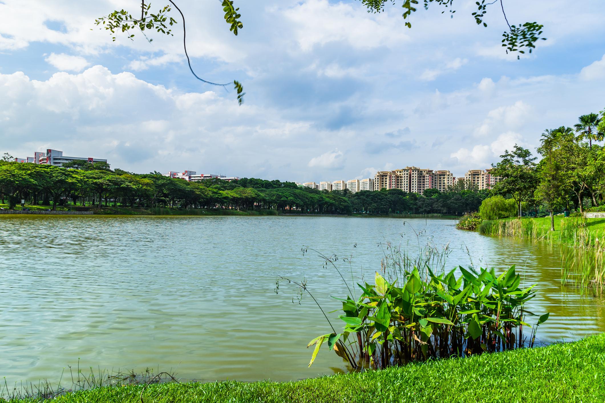 Punggol Park lake view