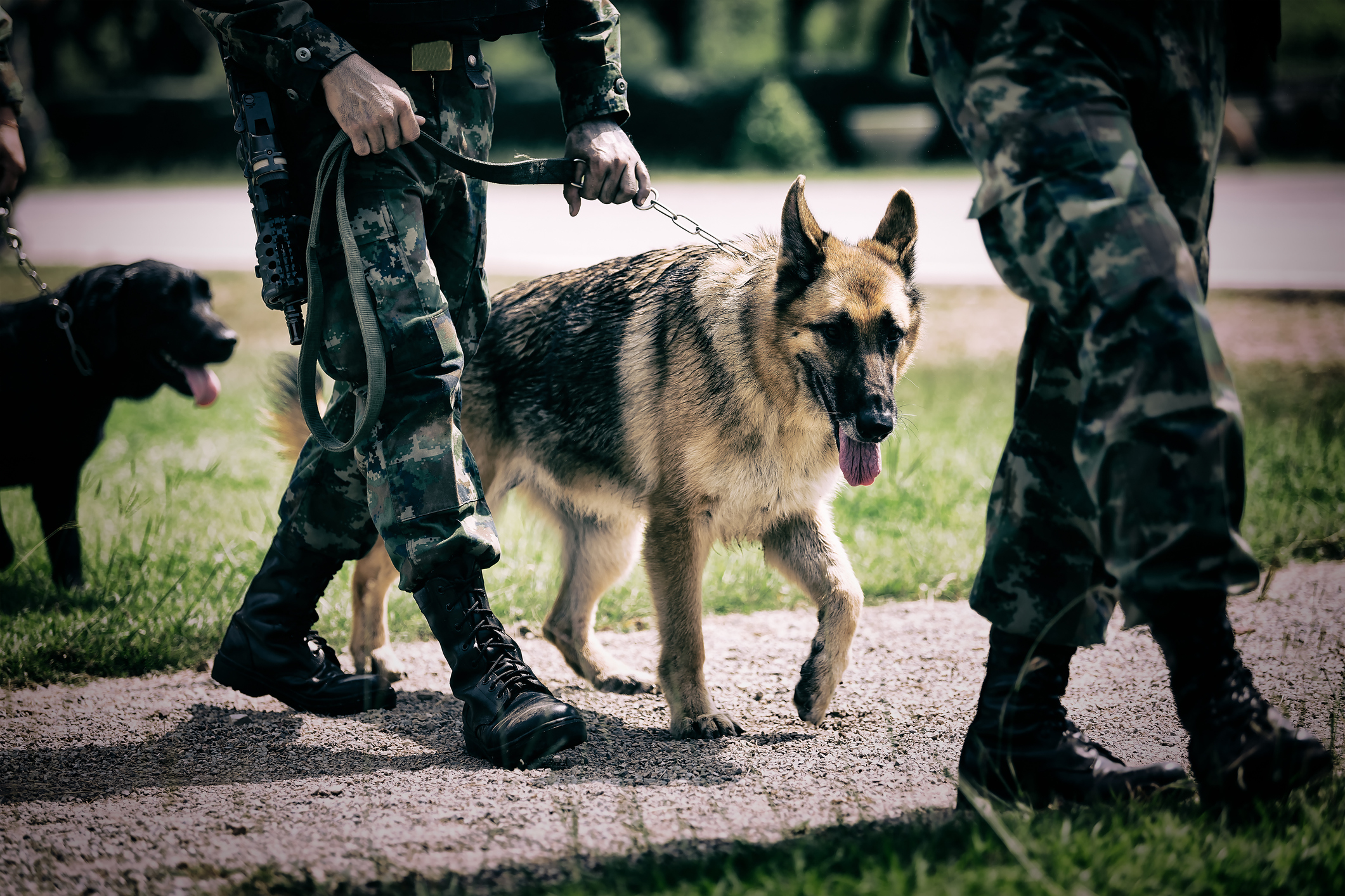 Army arriving with trained dogs