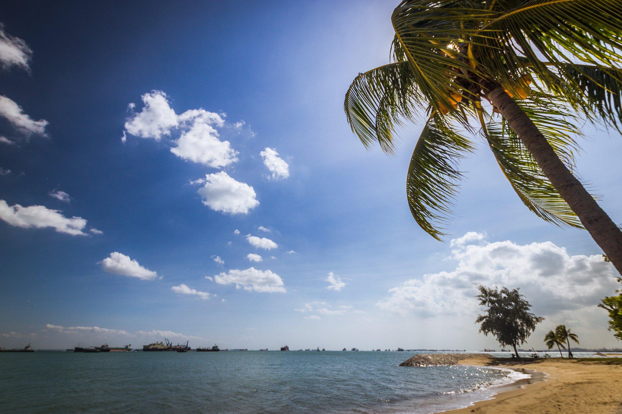 East Coast beach with coconut tres