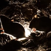 Mice underground