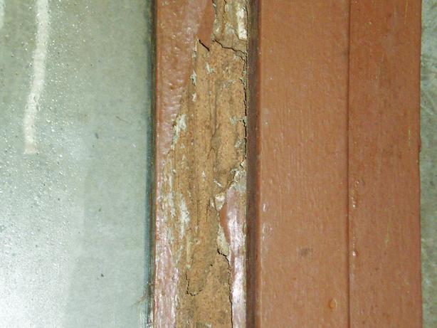 Termite pests damaged doorframe