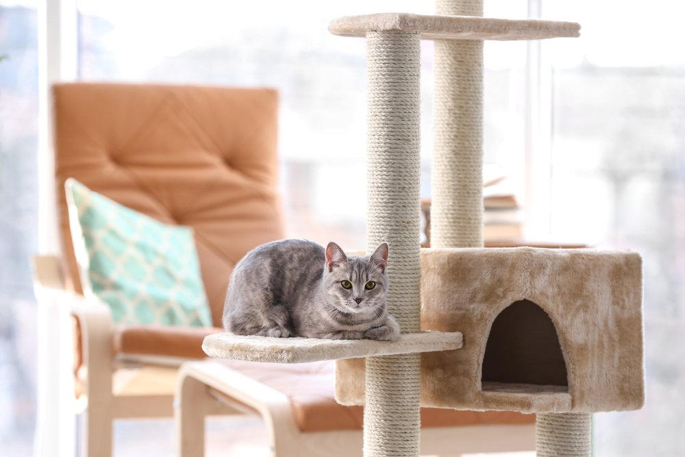 Cat resting on the scratching tower.