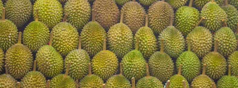 A durian stall with neatly arranged durians on the shelf.