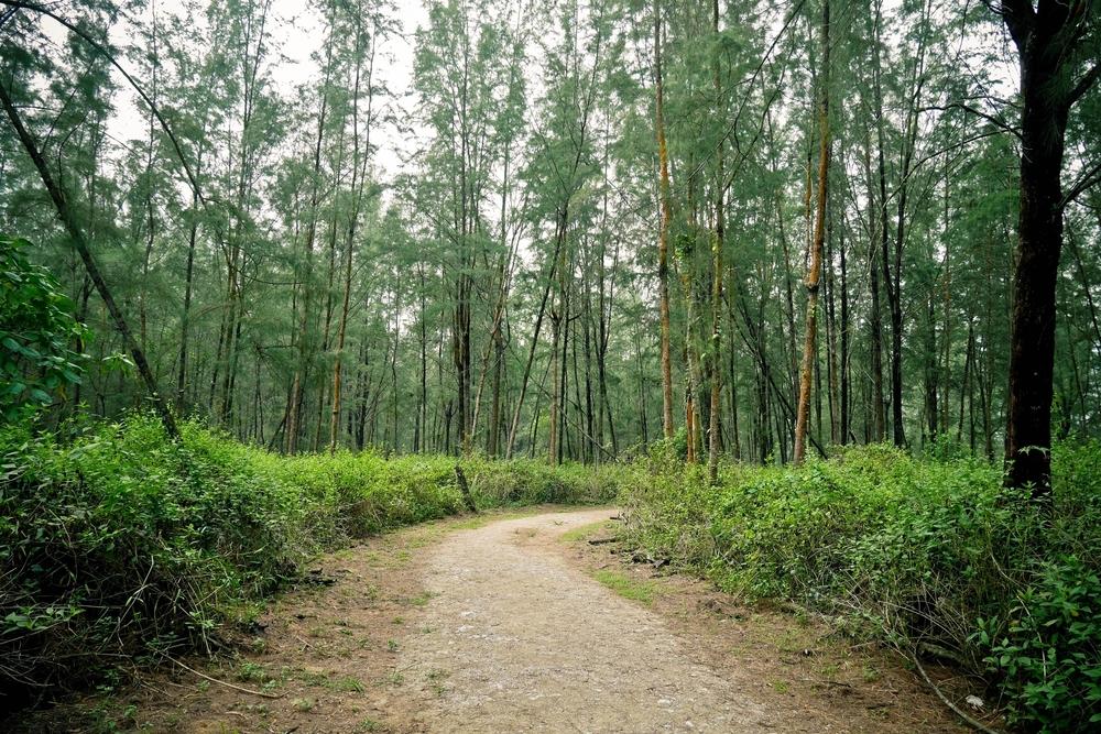 The lush vegetation providing shelter for visitors.