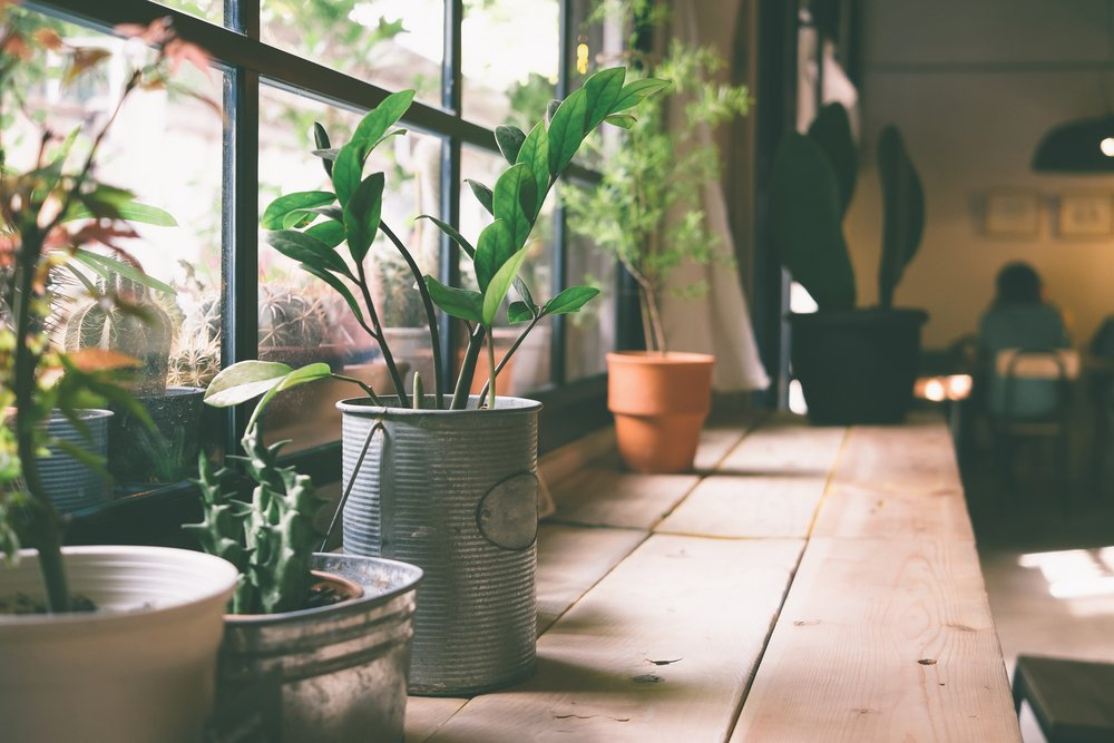 Indoor Plants Placed Near the Window