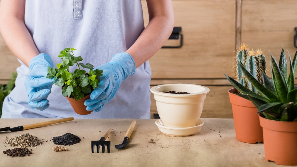 Woman Repotting Indoor Plant