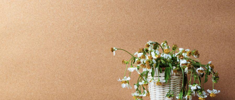 Wilted Indoor Plant