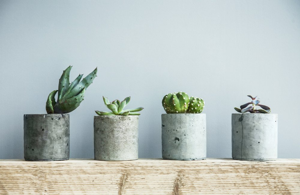 Succulent Plants On Display At Home