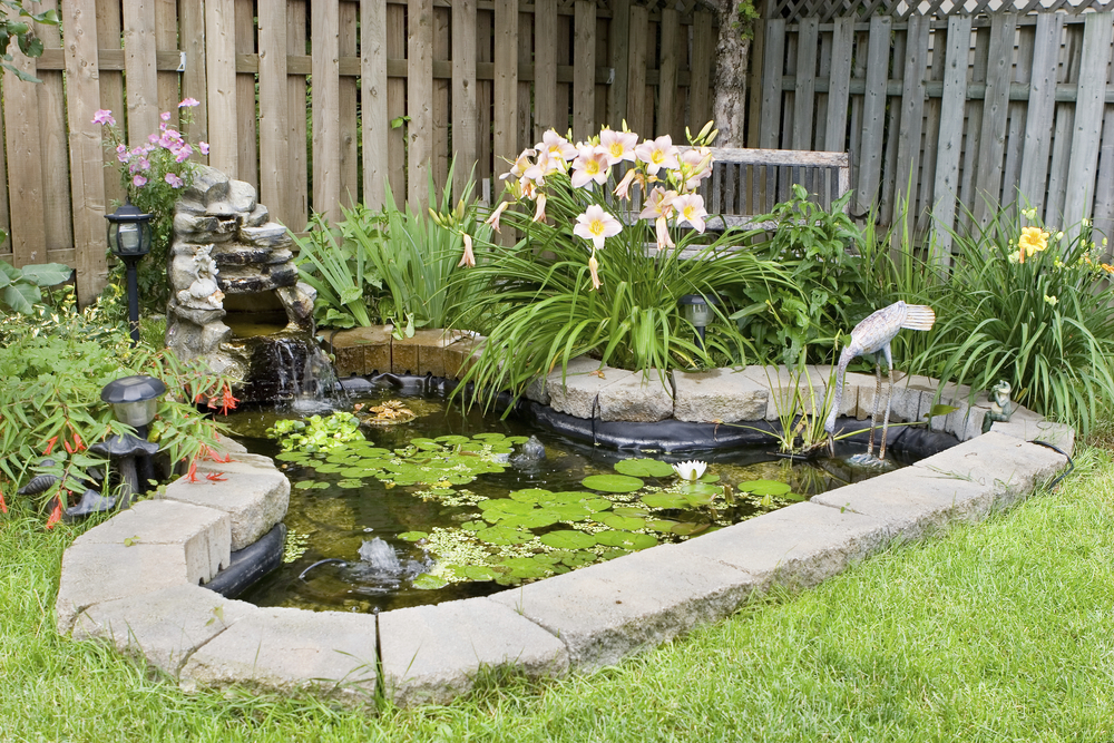 Garden Pond in the Backyard of a Home