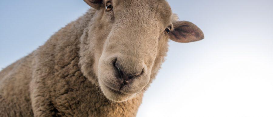 Move to cheap Australian farmouse?