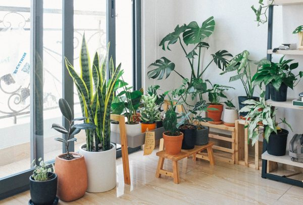 Potted plants in a house, which can increase property value