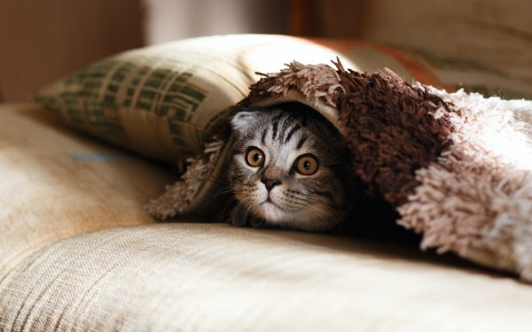 A kitten under a blanket on a sofa