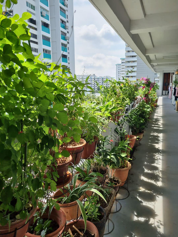 Annie Koh's home garden