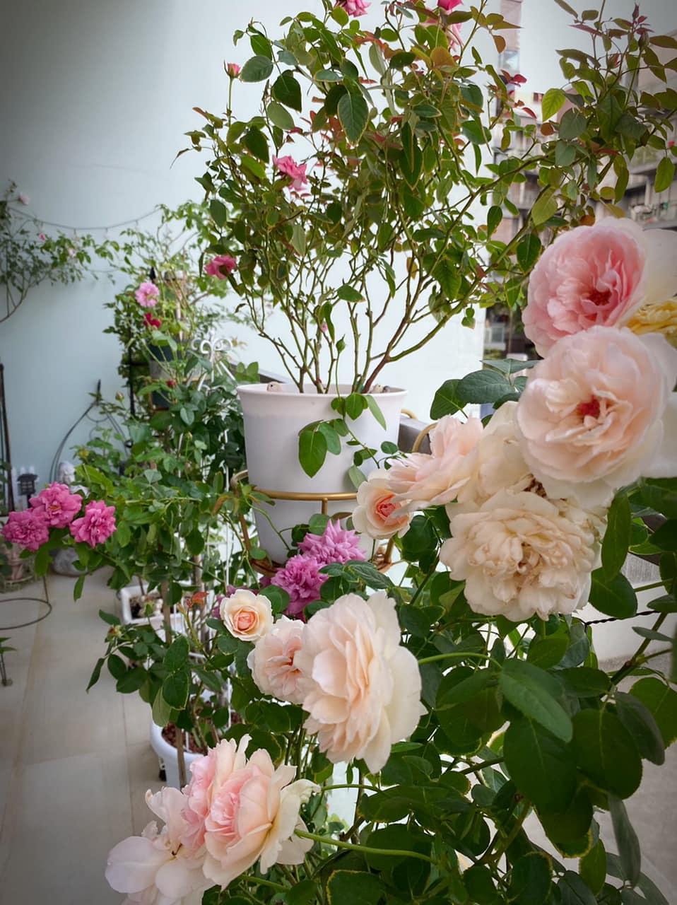 Hanh Nguyen's home garden