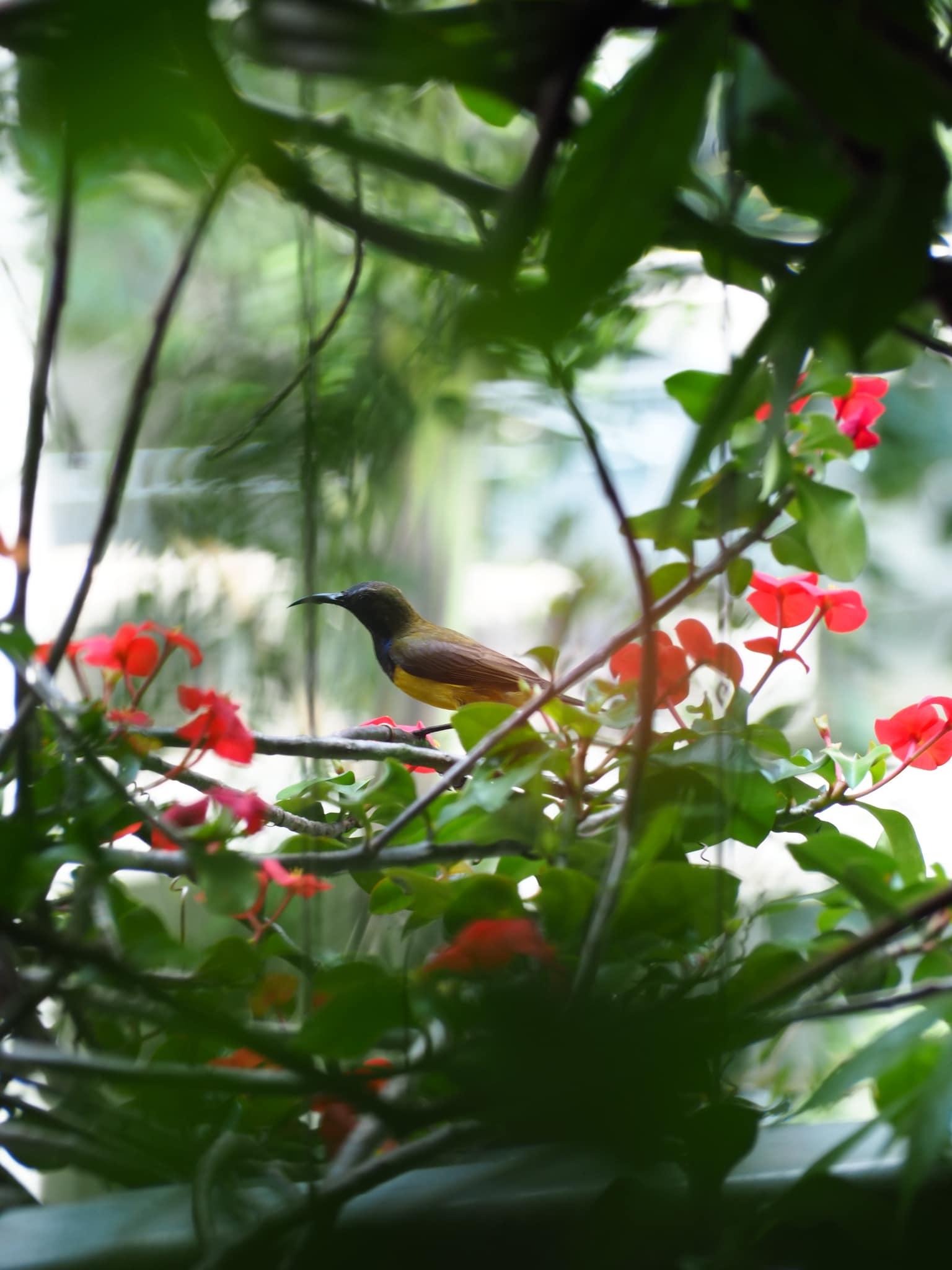 A bird at the garden balcony