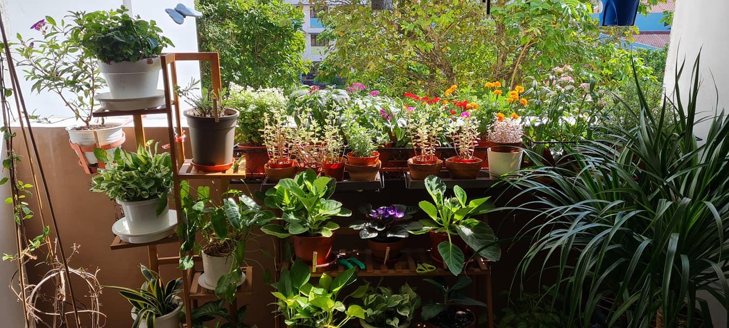 Rostam's home garden