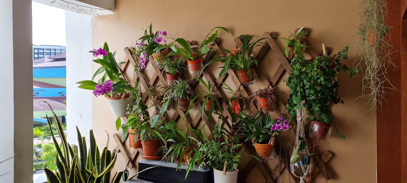Rostam's plants on the wall